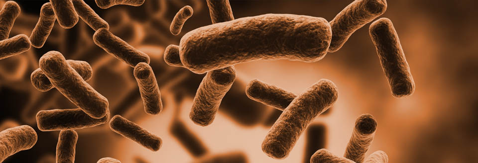 The Microbiome Group